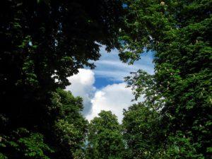 tree-220664_1280